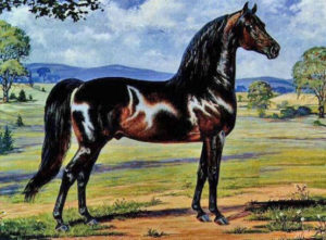 Figure, Morgan Horse